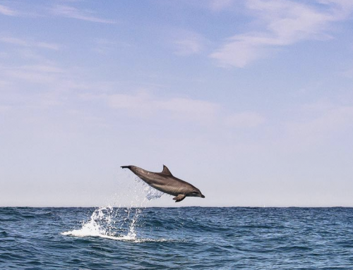 6 OCEAN PHOTOGRAPHERS TO FOLLOW ON INSTAGRAM